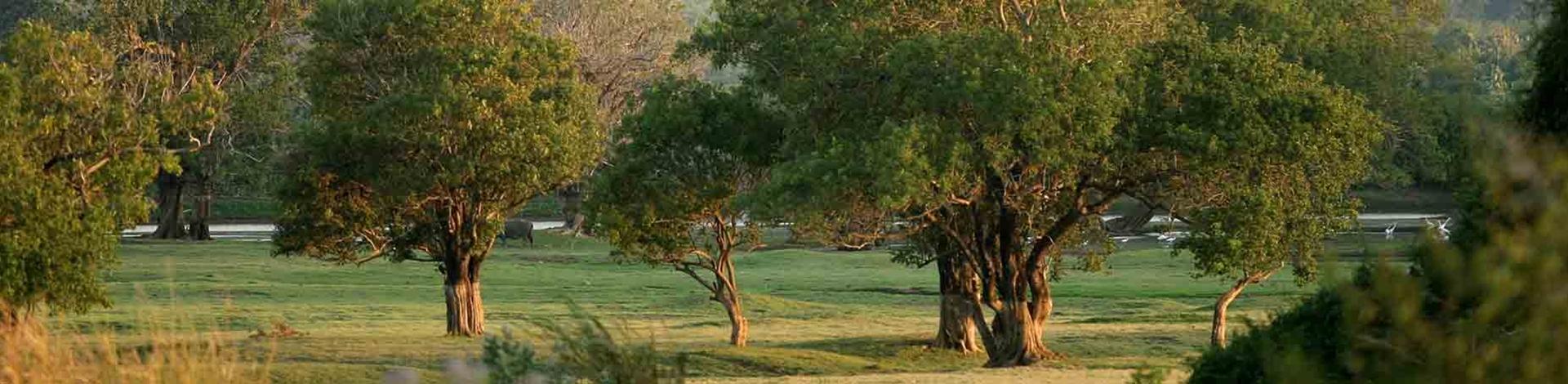 Thoniyagala